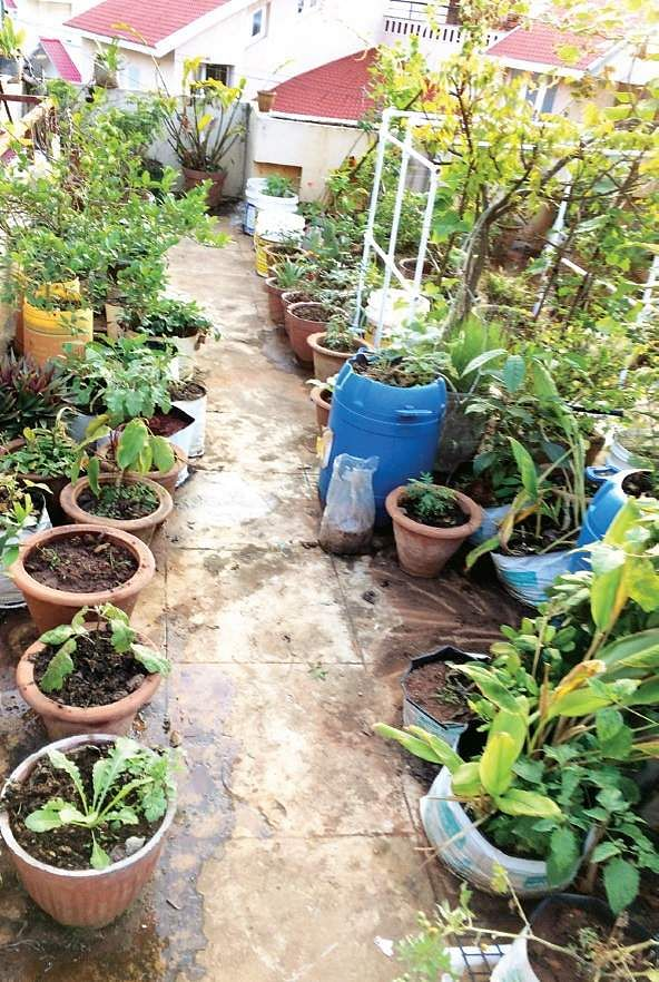 On terraces try soil less gardens the new indian express for Terrace vegetable garden by harikumar