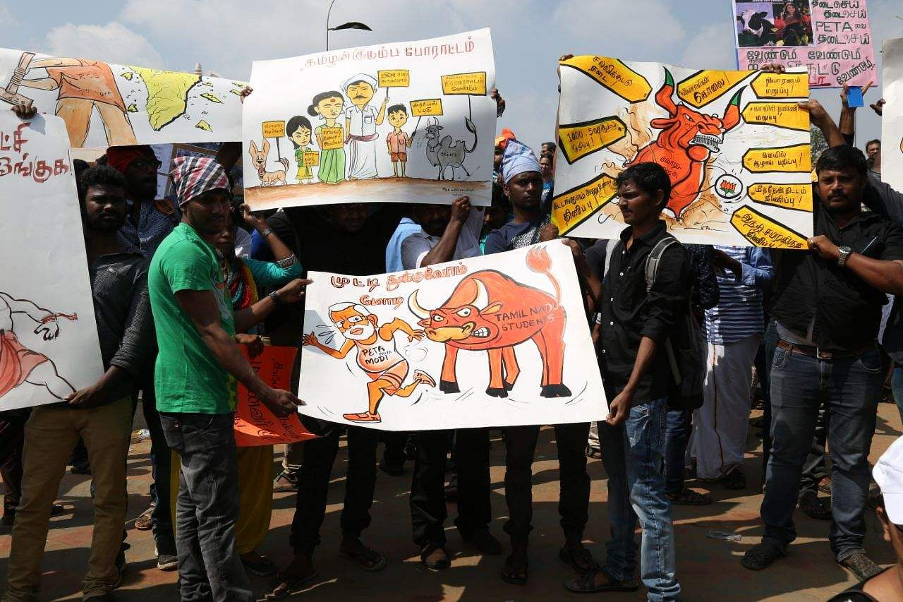 Union ministries clear ordinance on Jallikattu
