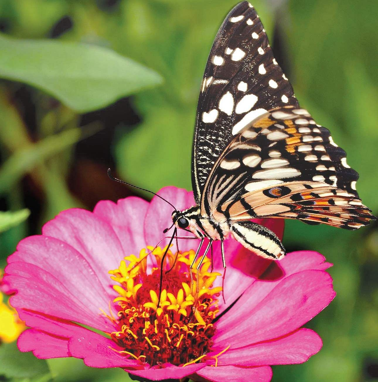 How To Grow A Butterfly Garden The New Indian Express