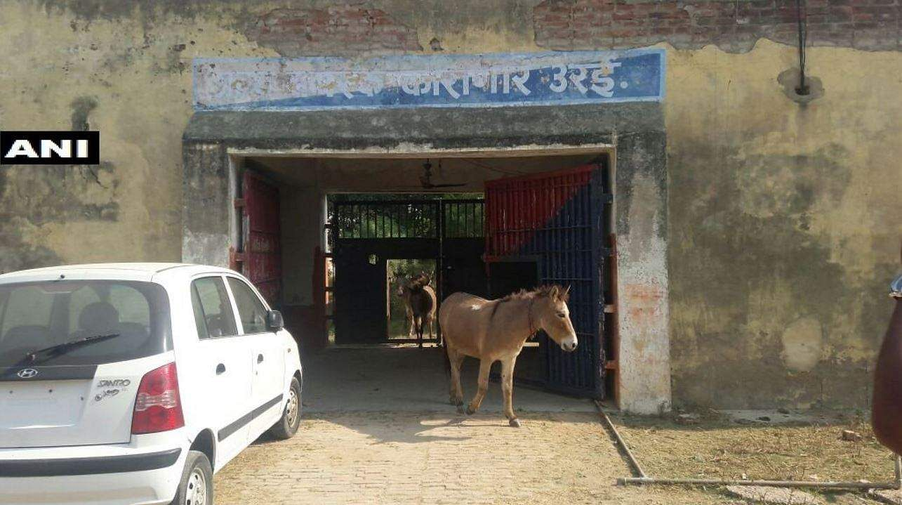 Uttar Pradesh: Eight donkeys serve 'jail term' for destroying crops in Orai