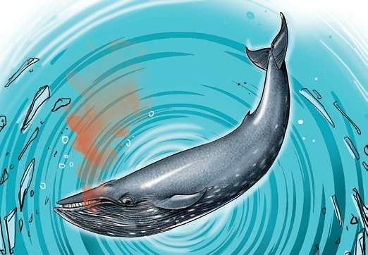 Killer Blue Whale game claims another life in UP