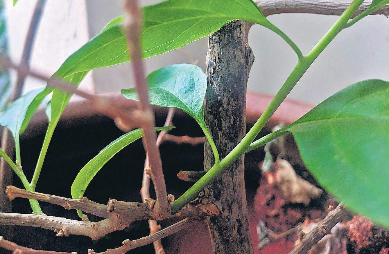 Are Dead Plants Really Dead The New Indian Express,Paper Easy Diy Christmas Decorations For Kids