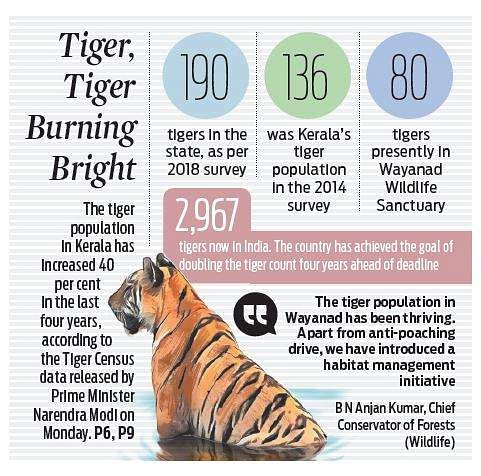 Tiger population in Kerala swells 40 per cent in four years
