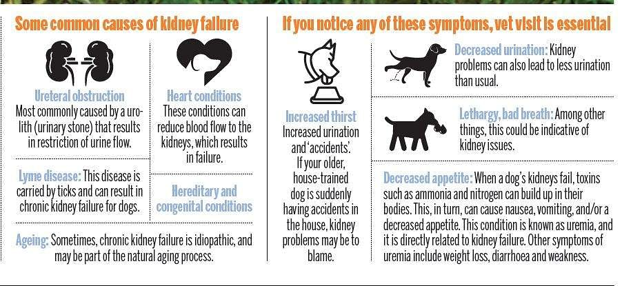 Why Your Dog Should Drink Enough Water The New Indian Express