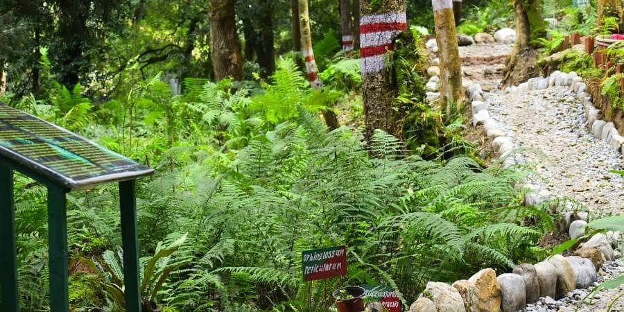 India Established its Largest Open Air Fernery in Uttarakhand