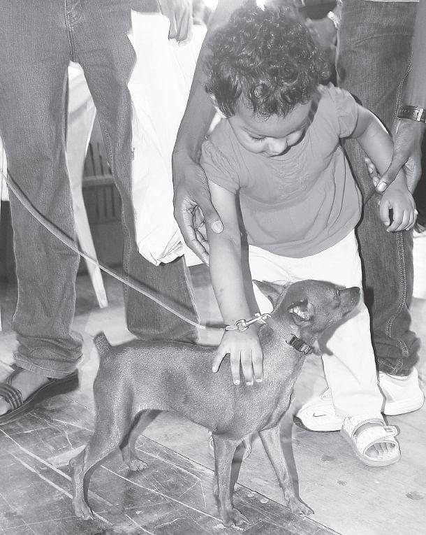 annual-dog-show