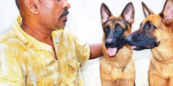 1-DOG