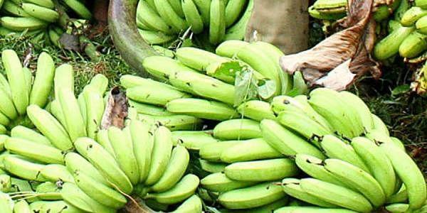 banana_EPS