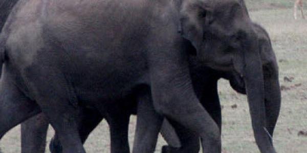 elephants-es