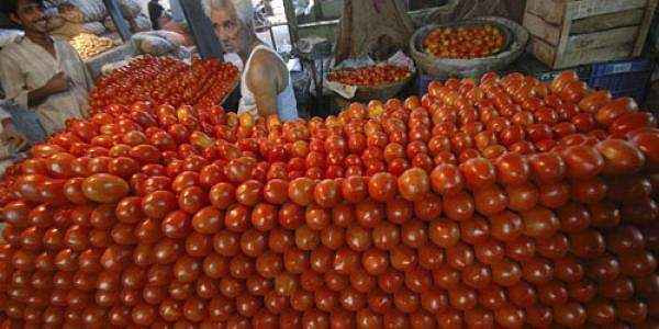 Tomatoes-AP-L