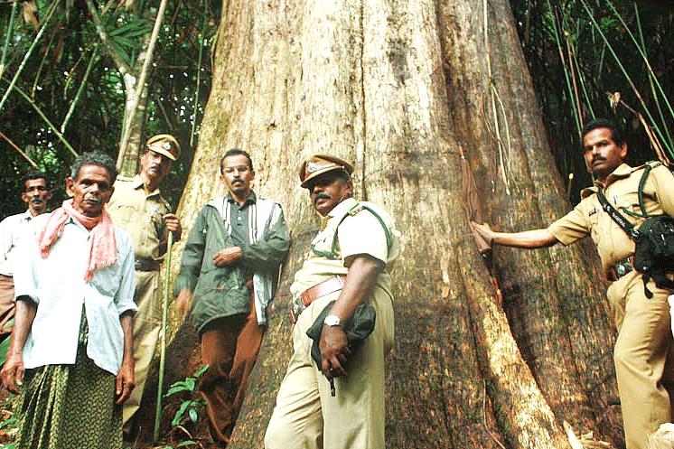 biggest-teak-tree