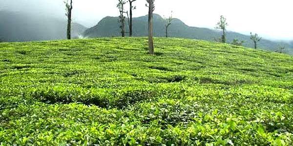 harison-malayalam-U-E