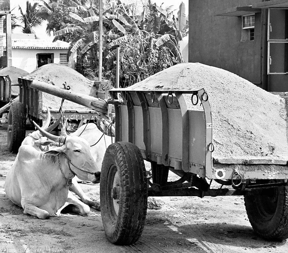 Bullock-Carts