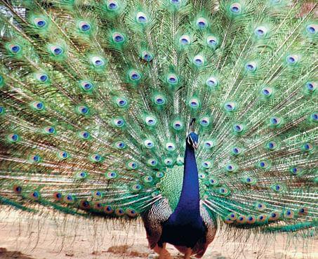 Mysore-zoo
