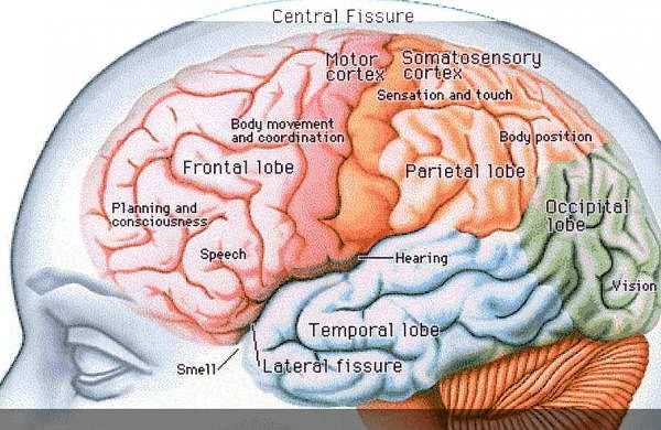 A small part of your brain is crucial in decision-making ...