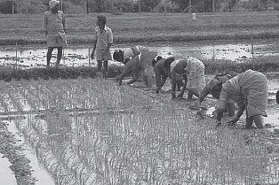 MGNREGS-Workers