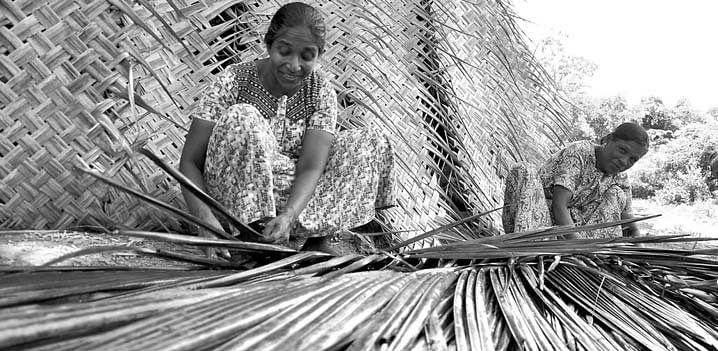 Weave-Coconut