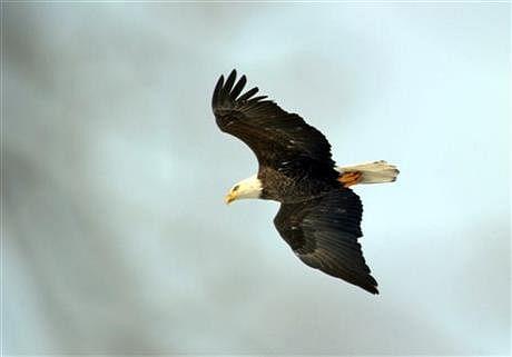 Eagle1AP
