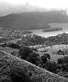 Nilgiri-Reserve