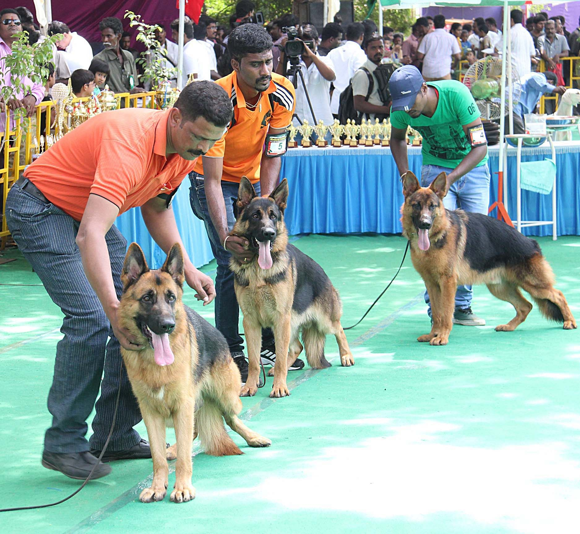 all-breed-championship-dog-exhibition-EPS (3)