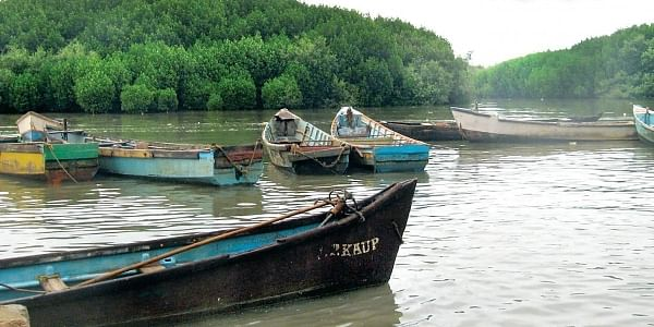 Tourists can now take a boat ride through the mangrove forests in Ullal in Mangaluru taluk, Honnavar in Uttara Kannada district and Byndoor in Udupi | EPS