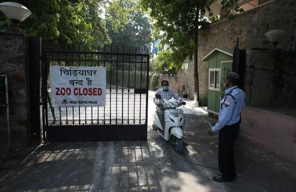 should all zoos be shut down? essay In this ielts zoo essay you have to discuss whether you think zoos are cruel and should be shut down or whether they are useful as they protect some wild animals essays on zoos have appeared in the ielts test before and this was a question that was recently in the test some people think that zoos.