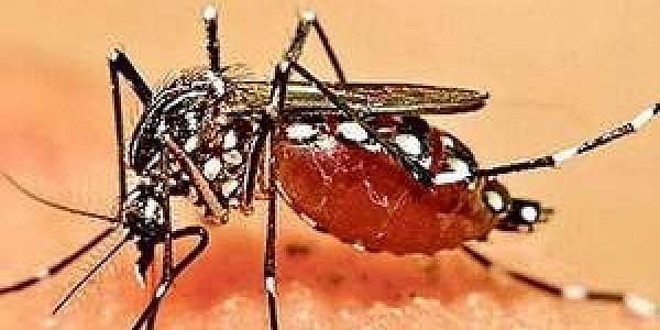 As_dengue