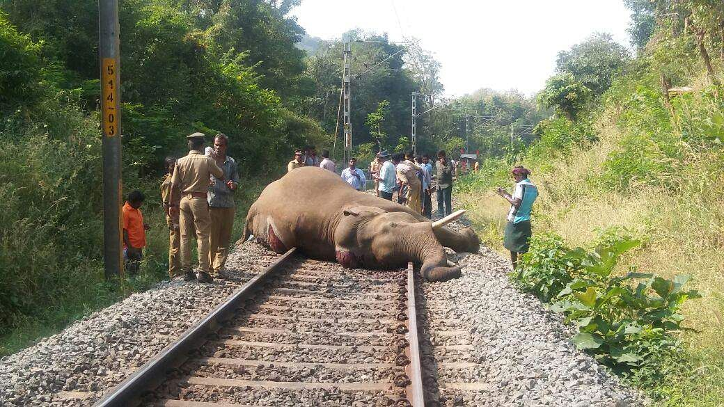 The tusker was constantly seen on the tracks during the last two weeks.