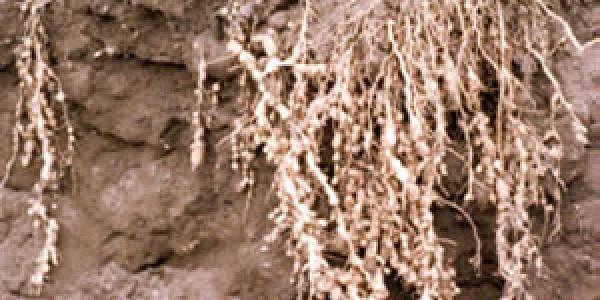 20nov_crops