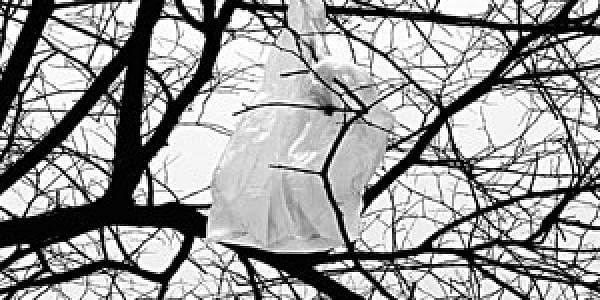 7jun_tree