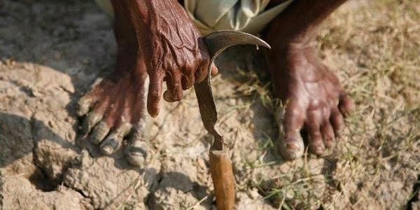 Farmer-Sickle_Reuters