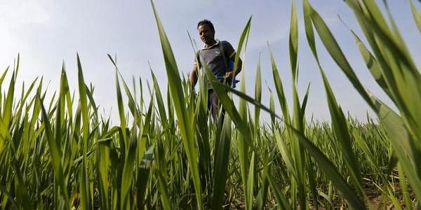 Agriculture-Reuters