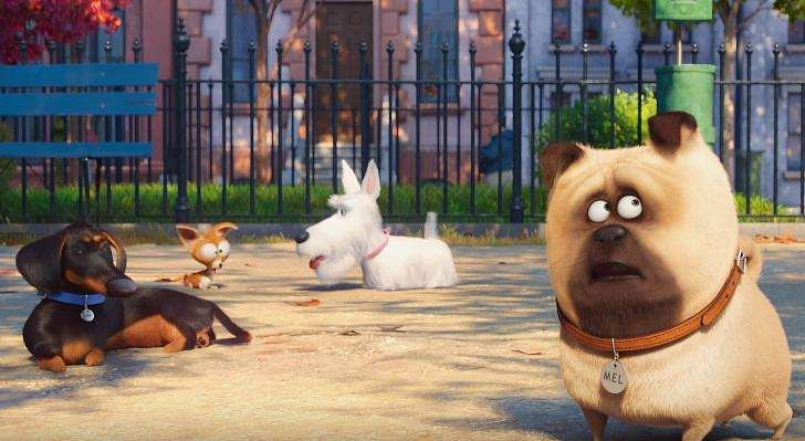 5. The Secret Life of Pets Worldwide gross: $875,350,142 Budget: $75 million Directors: Chris Renaud, Yarrow Cheney Release date in India: 06 July 2016.