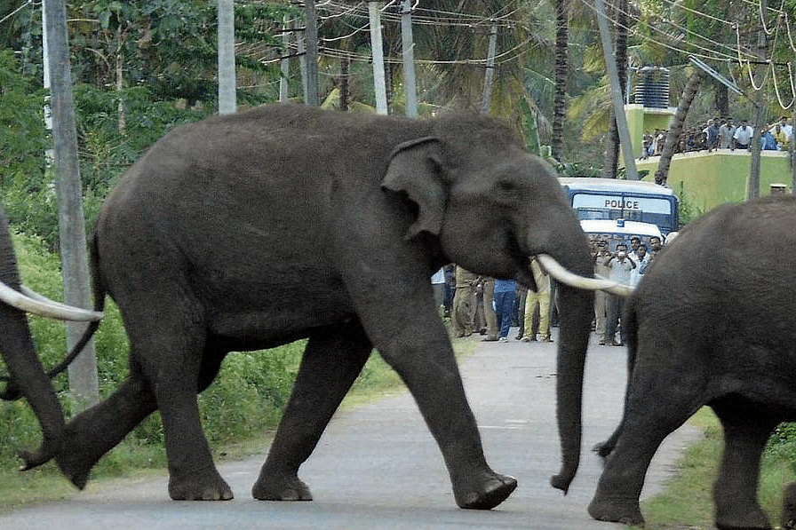 Elephants_PTI