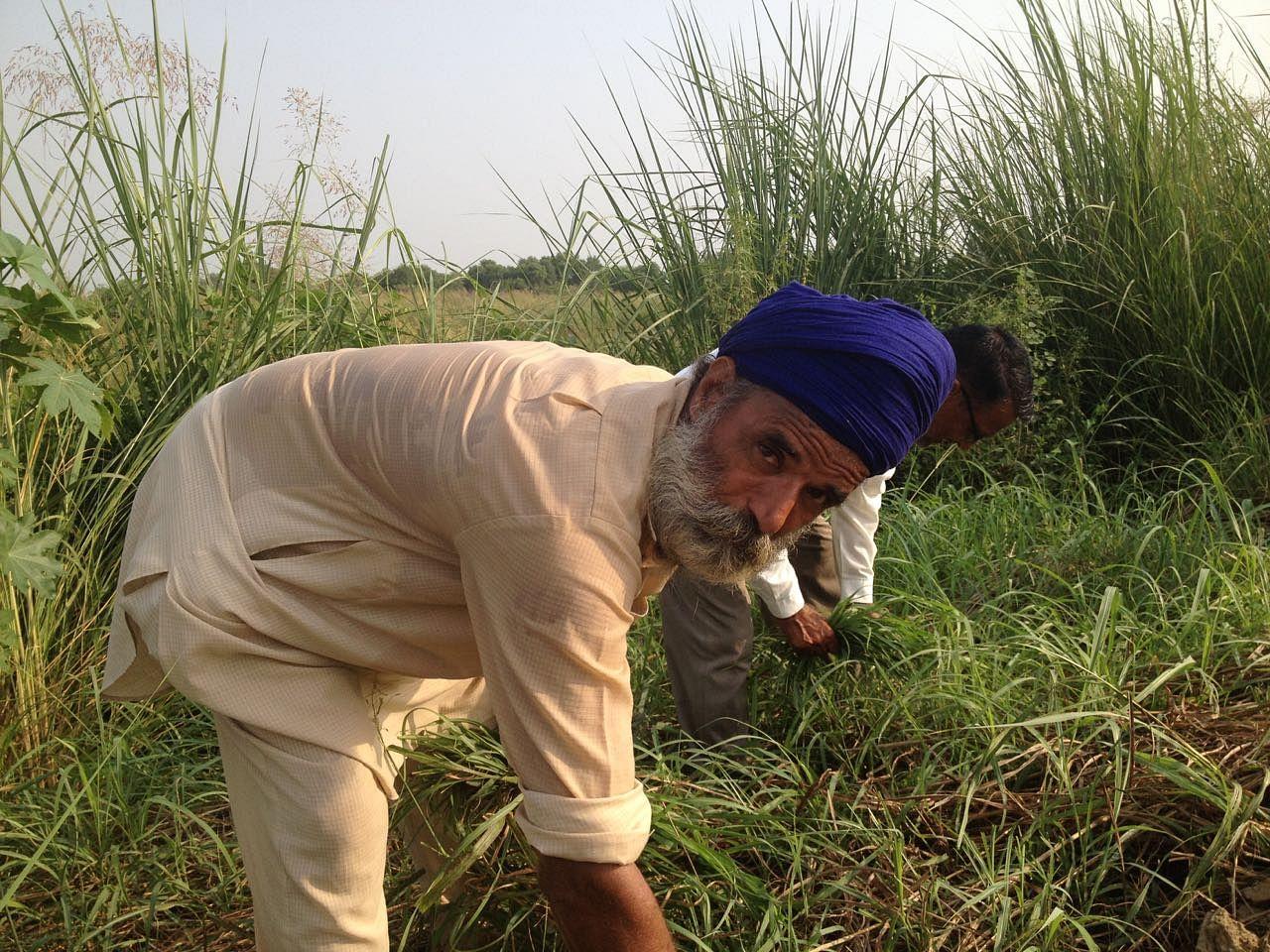 Farmer-EPS.jpg