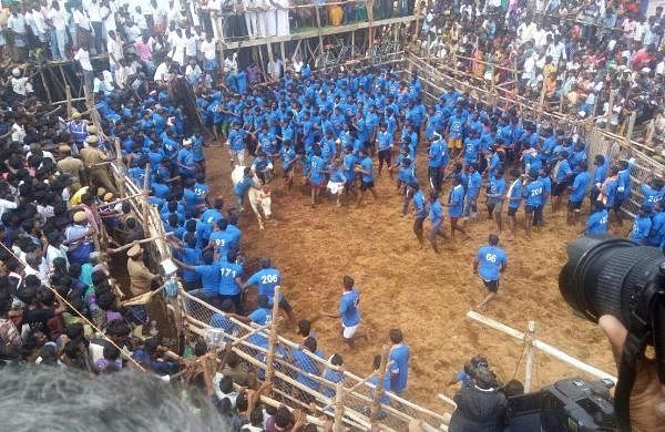 Chennai bull for indian cuckold couples - 2 part 7