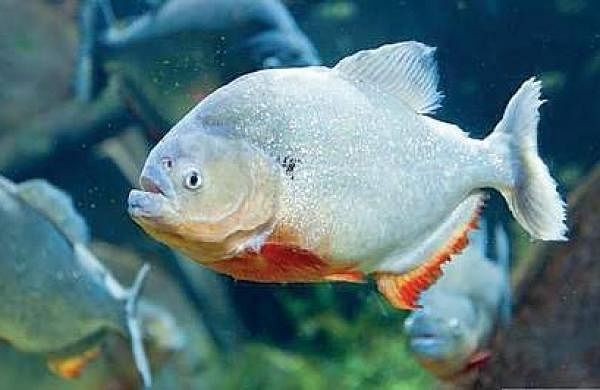 Commercially important marine fish species will be targeted. (File photo)