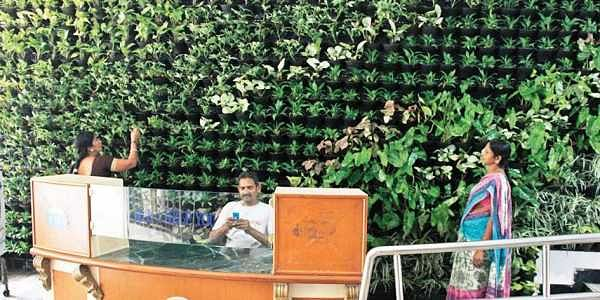Vertical garden comes up in GHMC head office- The New Indian Express