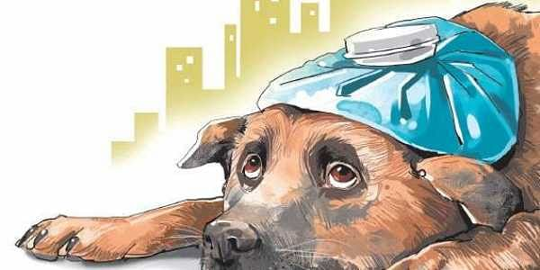 No more euthanasia- The New Indian Express