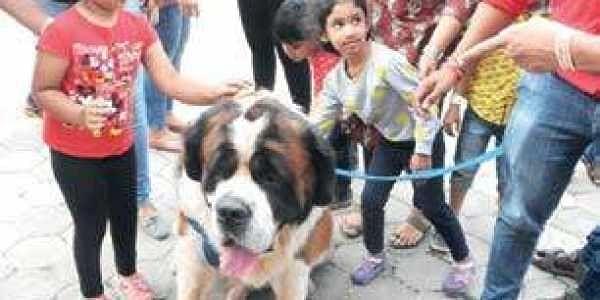 Sen Bernard Dog Price In Kerala
