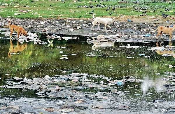 Banjara lake in Hyderabad turns into a breeding ground for dogs and mosquitoes | r satish babu