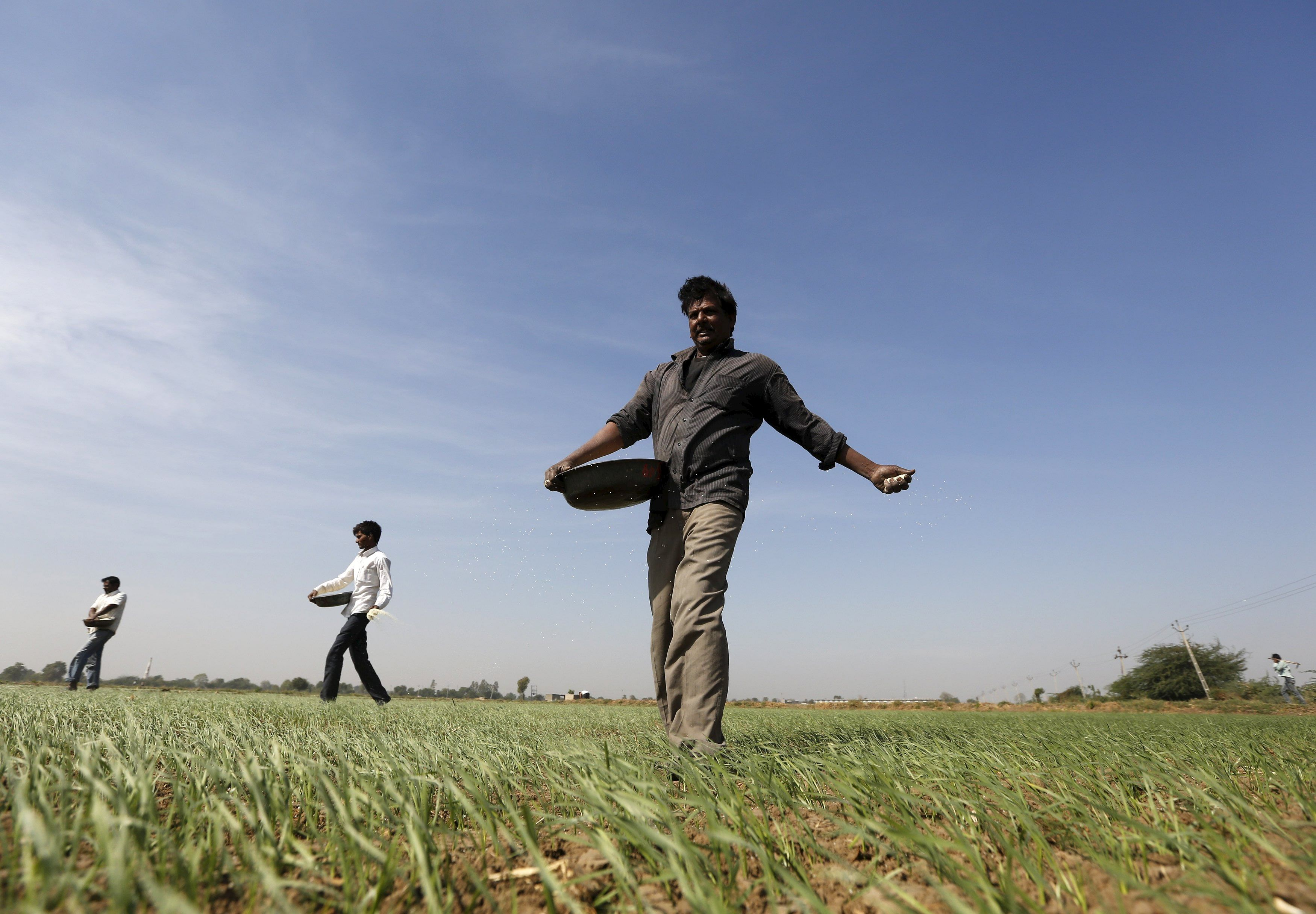 Maharashtra government wants CBI to probe pesticide-related farmers deaths