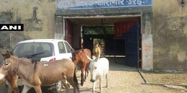 UP police detaindonkeys for destroying 'expensive plants'. Cops in Urai had some uncommon prisoners for four days. The detainees had allegedly destroyed the jail property. And the police caught the 'culprits'- the donkeys.