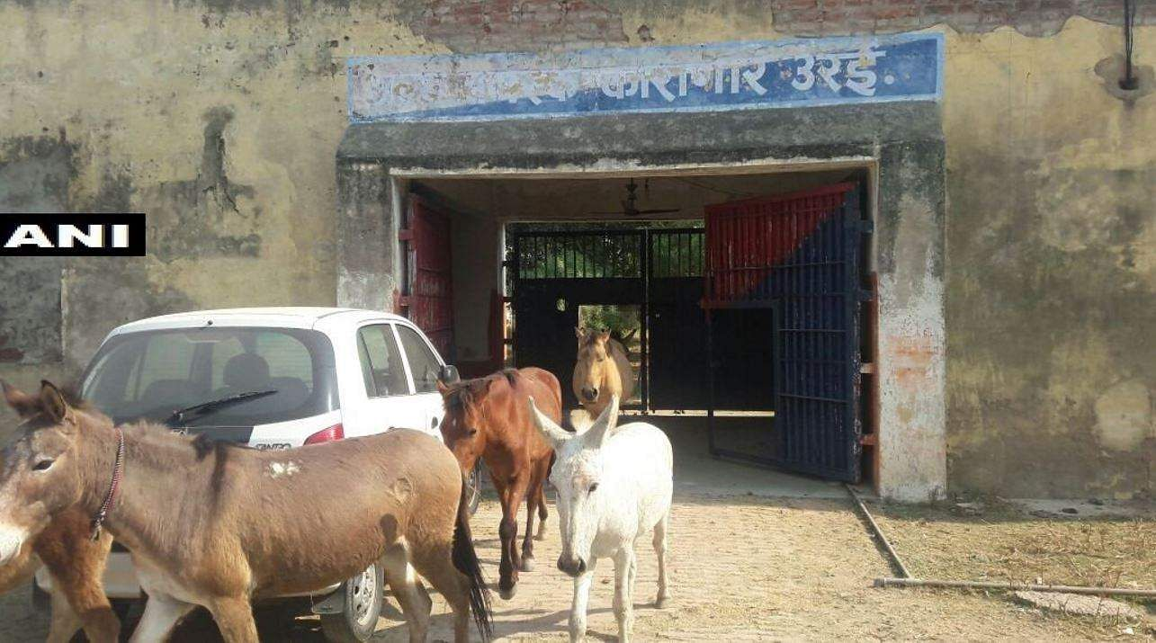 Donkeys jailed for destroying 'expensive' plants, Twitter reacts