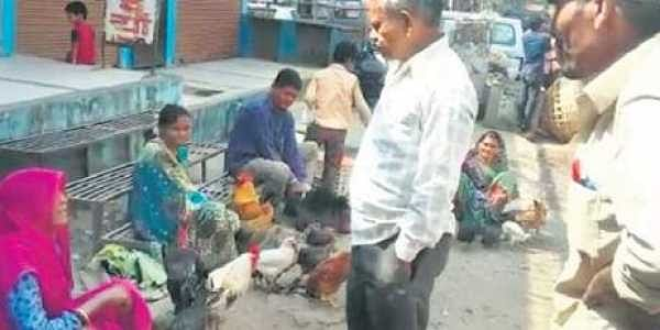 Kadaknath chicken and he-goat prices soar on bulk-buying by