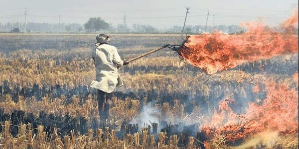 farmer, burning, agriculture, stubble burning