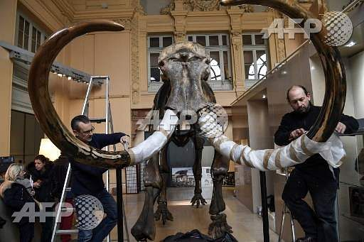 A mammoth goes under the hammer in Lyon