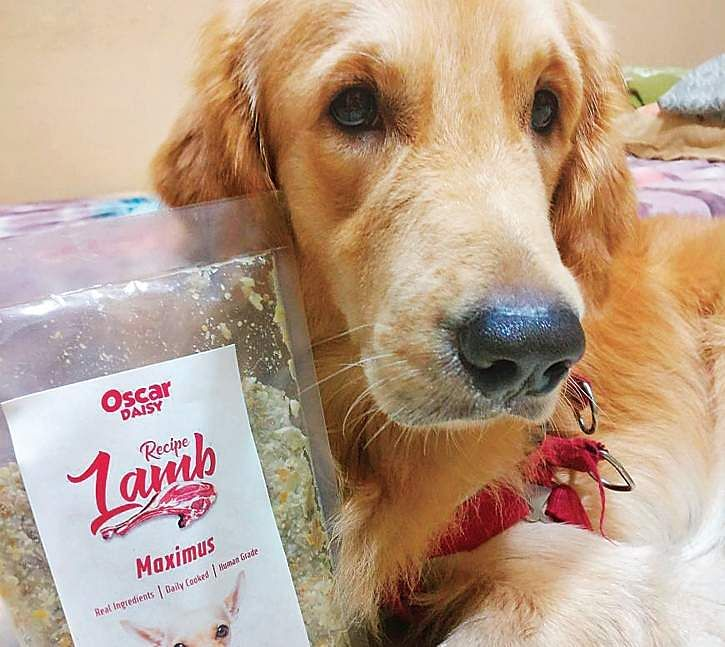 Home delivery of freshly made food for your pup the new indian express maximus with a oscar daisy nutrient packphotos p jawaha forumfinder Choice Image