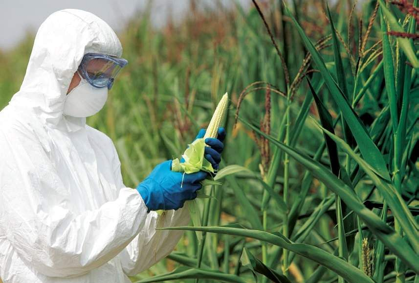GM crops, genetic modification