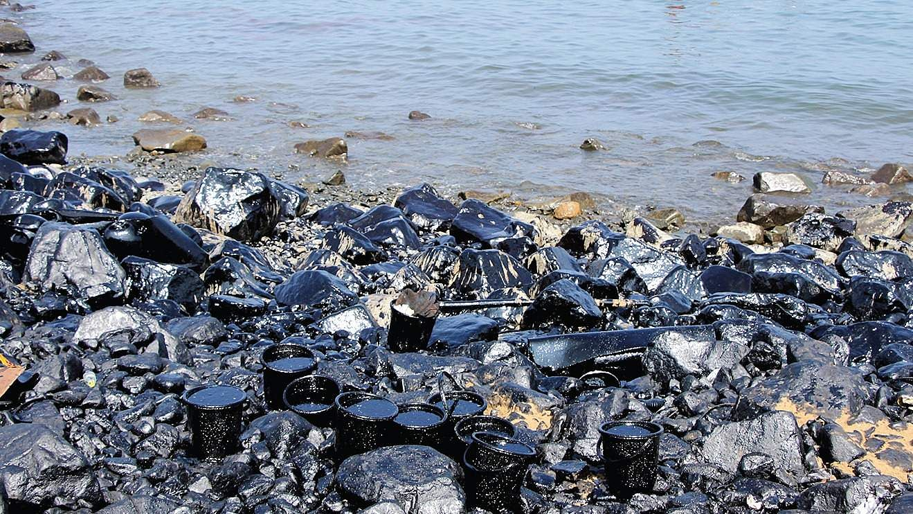 the effects of the oil spill in alaska What species have been harmed the bp oil spill is still affecting some of the most productive and fragile marine ecosystems in the united states.